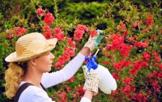 woman pesticide