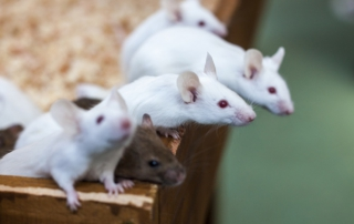Dr Bennis: Glyphosate Exposure Leads to Anxiety and Depression in Mice